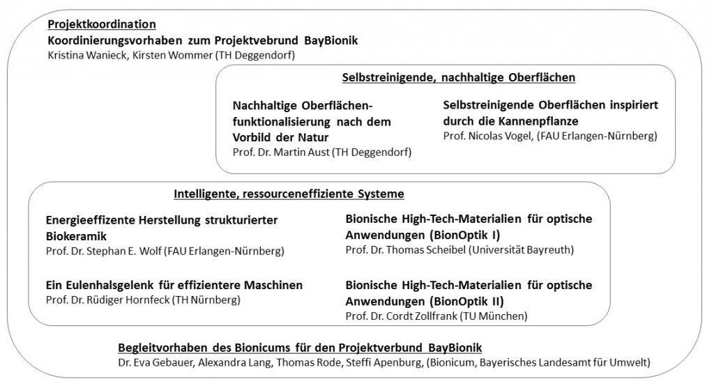 """Es gibt zwei Projektschwerpunkte. Dem ersten Schwerpunkt (""""Selbstreinigende, Nachhaltige Oberflächen"""") werden die zwei Teilbereiche """"Nachhaltige Oberflächenfunktionalisierung nach dem Vorbild der Natur"""" (Ansprechpartner: Prof. Dr. Martin Aust, TH Deggendorf) und """"Selbstreinigende Oberflächen inspiriert durch die Kannenpflanze"""" (Ansprechpartner: Pro. Nicolas Vogel, FAU Erlangen-Nürnberg) zugeordnet. Im zweiten Themenbereich (""""Intelligente, ressourceneffiziente Systeme"""") gibt es vier Teilprojekte: """"Energieeffiziente Herstellung strukturierter Biokeramik"""" (Ansprechpartner: Prod. Dr. Stephan E. Wolf, FAU Erlangen-Nürnberg), """"Ein Eulenhalsgelenk für effizientere Maschinen"""" (Ansprechpartner: Prod. Dr. Rüdiger Hornfleck, TH Nürnberg), """"Bionische High-Tech-Materialien für optische Anwendungen I und II (Ansprechpartner für I: Prof. Dr. Thomas Scheibel, Universität Bayreuth; Ansprechpartner für II: Prof. Dr. Cordt Zollfrank, TU München). Neben den Projektschwerpunkten wird ebenfalls ein Begleitvorhaben des Bionicums durchgeführt (Dr. Eva Gebauer, Alexandra Lang, Thomas Rode, Steffi Apenburg; Bayerisches Landesamt für Umwelt). Durch die Projektkoordination (Kristina Wanieck und Kirsten Wommer, TH Deggendorf) werden alle Teilprojekte koordiniert, organisiert und verwaltet."""
