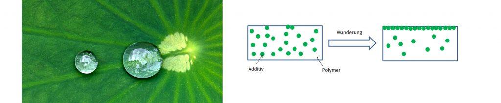 Lotuseffekt: Ein runder Wassertropfen auf der Oberfläche eines Lotusblattes. Außerdem: Die Wanderung vom Additiv in einem Polymer