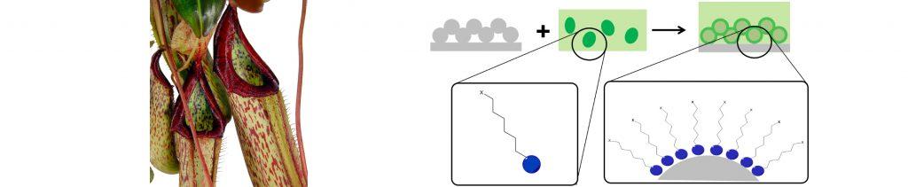 Die Reaktion von zwei Stoffen miteinander, zur Entstehung einer guten Beschichtung, mit dem Vorbild der Kannenpflanze